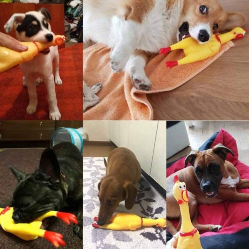 Rubber dog toy rubber pet toys screaming chicken spielzeug best selling dog toys