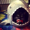 Grey shark bed, suitable for small cats and dogs, with removable cushion, waterproof bottom