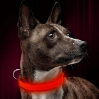 Chargeable LED light-up dog collar, Pet light Collar