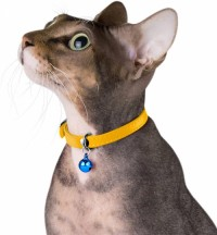 Leather cat collar, cat safety collar, elastic band, cat collar suitable for bells black blue red orange lime green