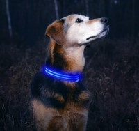 Dependable Performance LED Light Dog Collars Led Factory Dog Collar Light